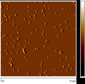 Gold nanorods - AFM